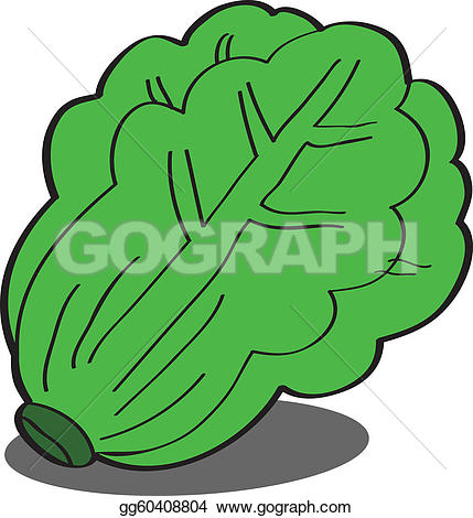 Lettuce clipart Free Clip green and fruits
