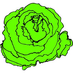 Lettuce clipart Clipart clipart 5 Free Clipartix