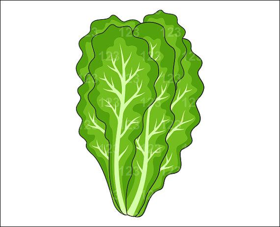 Lettuce clipart Com Clipart Lettuce Clipart Clipartion