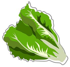 Lettuce clipart Clipart clipart 3 Free Clipartix