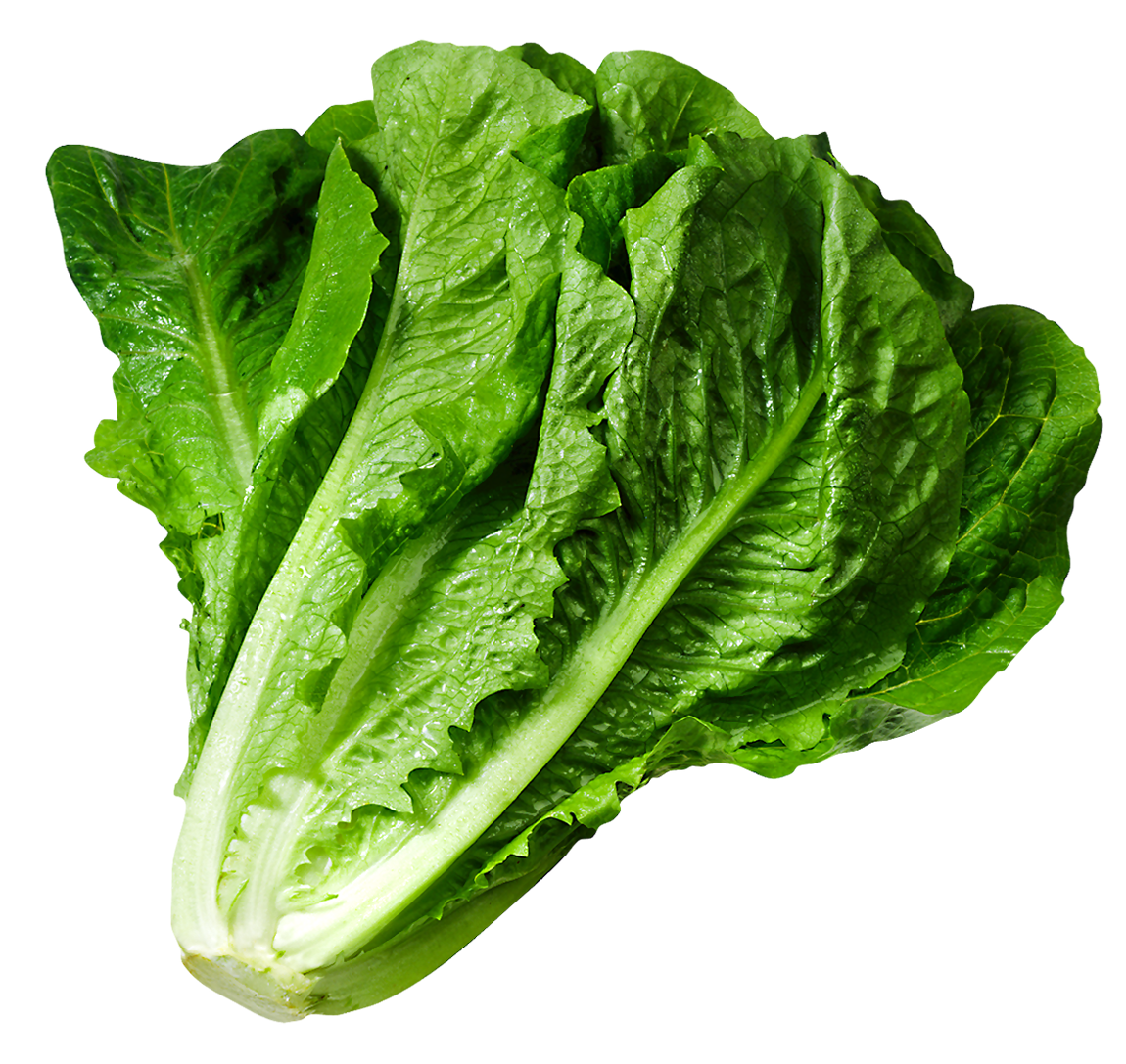 Food clipart lettuce #15