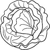 Cabbage clipart green salad For GoGraph cartoon Royalty book