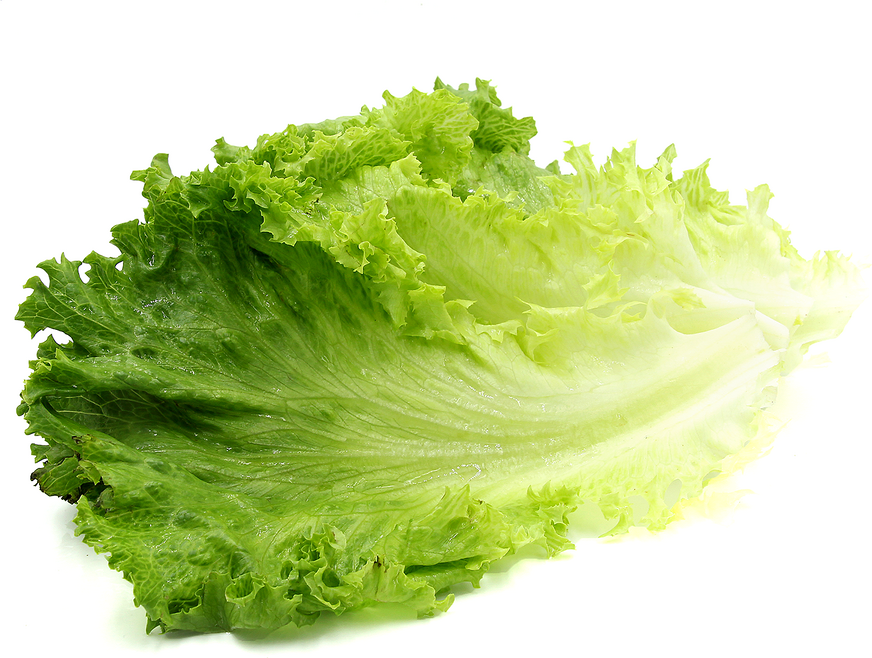 Lettuce clipart sayur Lettuce Information Green and Facts