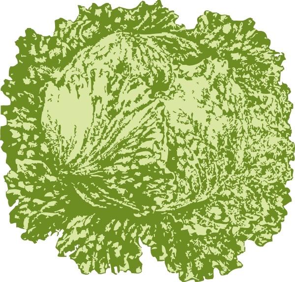 Lettuce clipart vector Vector) vector download Lettuce for