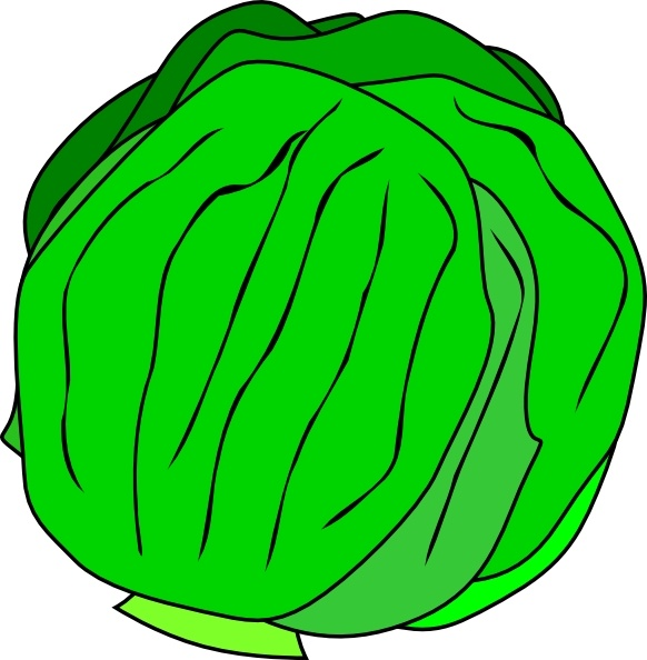 Lettuce clipart vector Free Lettuce vector Whole vector)