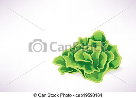Lettuce clipart vector Lettuce Art Lettuce  of