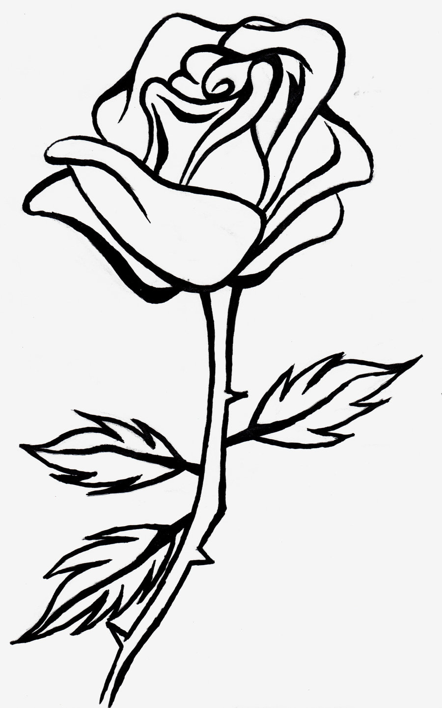 White Rose clipart sketch #1