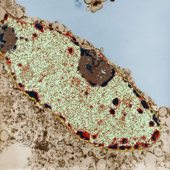 Light Microscopy clipart gambar #7