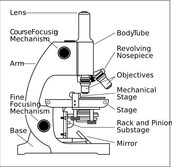 Light Microscopy clipart gambar #2