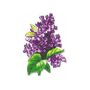 Lilac clipart #10