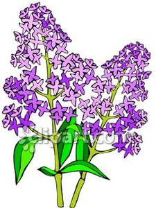 Lilac clipart #8