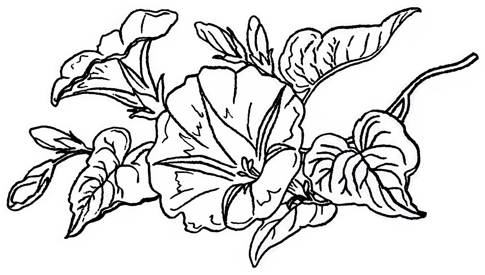 Morning Glory clipart black and white Lilac Flower Clipart art Clipart
