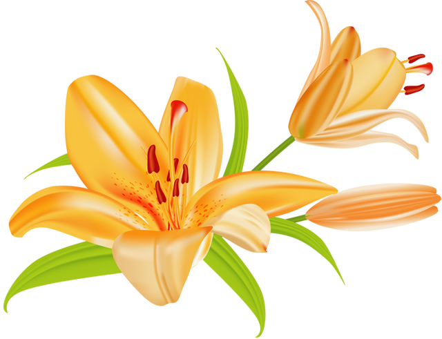Floral clipart lily Clipart lily com Lily Lily