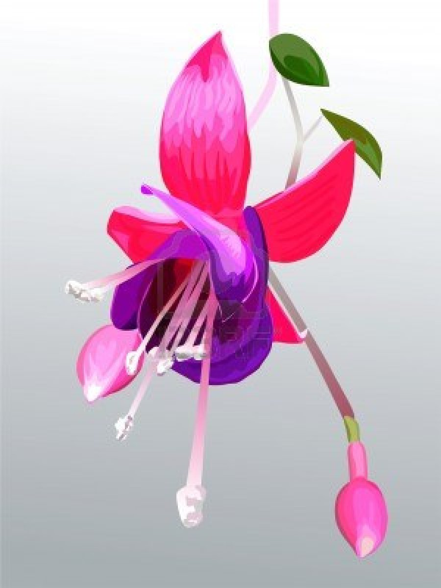Yellow Flower clipart fuschia flower Drawing  Flower Ink Pictures