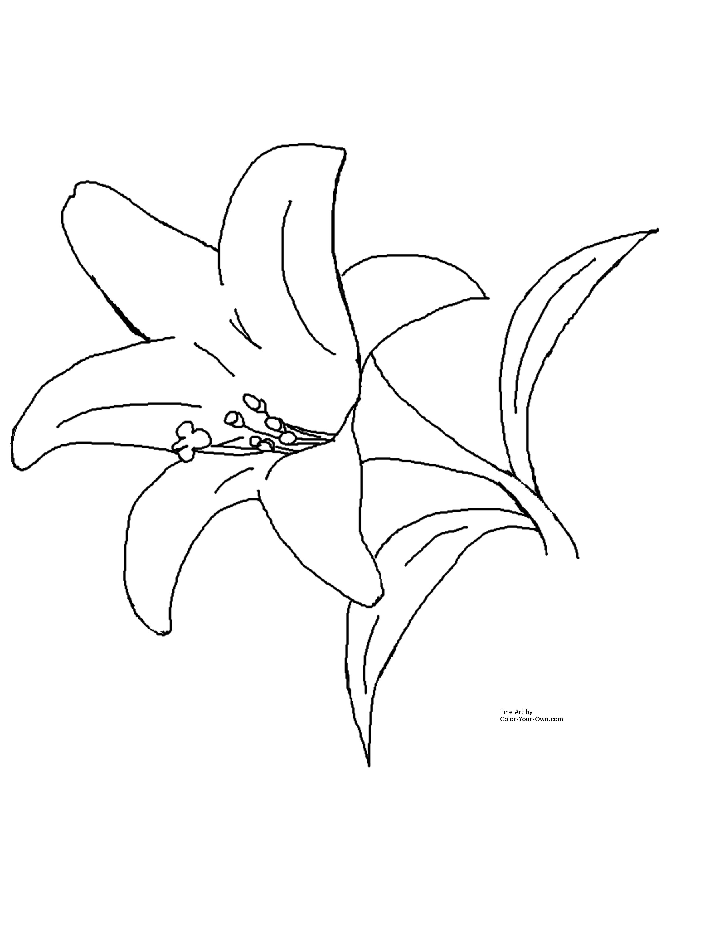 Simple clipart lily #9