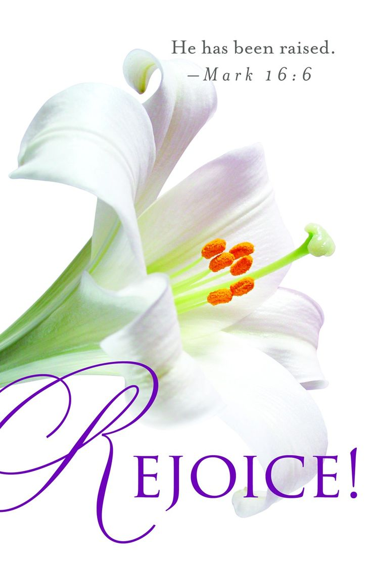 Beautiful clipart easter lily My Easter Easter cedar images