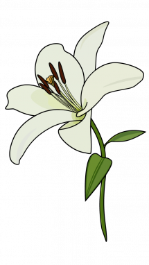 Simple clipart lily #13