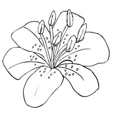 Simple clipart lily #14