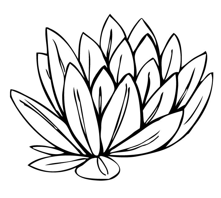 Calla Lily clipart easy Art search art Cartoon image
