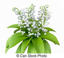 Lily Of The Valley clipart Lily  Valley the Valley