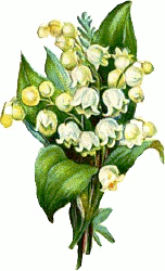 Lily Of The Valley clipart convallaria majalis Images Clipart graphics Domain art
