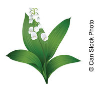 Lily Of The Valley clipart Lily of a 560 Valley