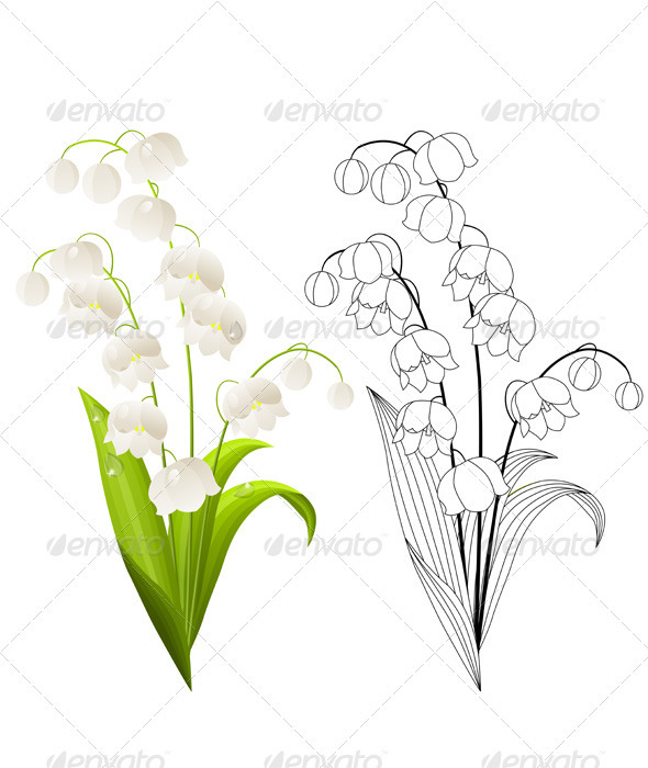 Lily Of The Valley clipart black and white Lily Isolated Valley of of