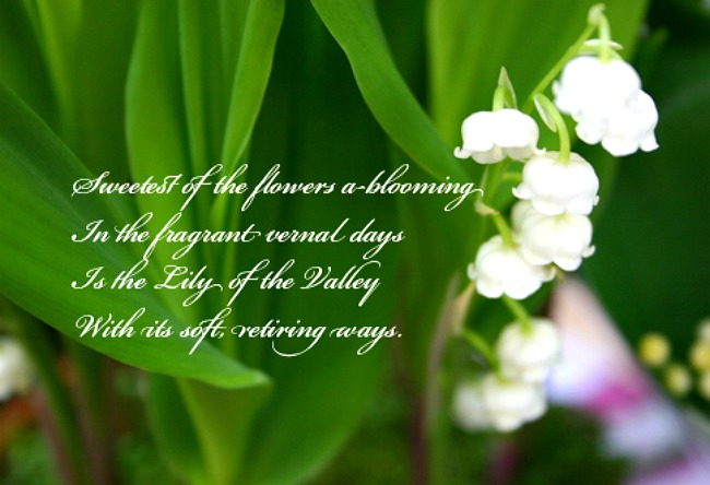 Lily Of The Valley clipart meaning Image information Lilies Of The
