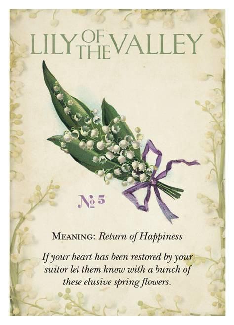 Lily Of The Valley clipart meaning Valley Lily of L Valley