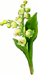 Lily Of The Valley clipart black and white Art Valley Download 2 Lily