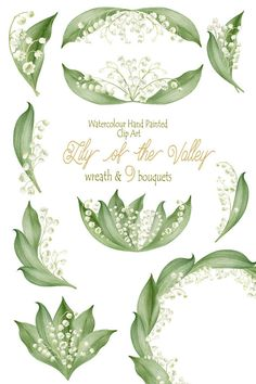Lily Of The Valley clipart watercolor More  Valley 14 Clipart