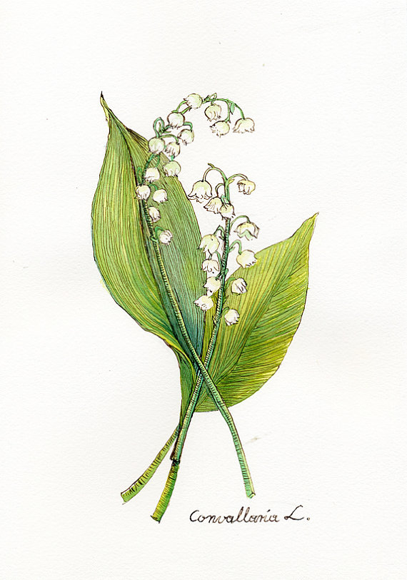 Lily Of The Valley clipart watercolor Watercolor $30 8x10 of but