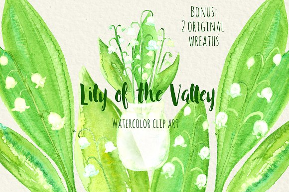 Lily Of The Valley clipart watercolor Watercolor Lily of Illustrations on