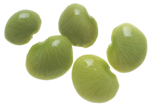 Lima Beans clipart jelly bean Beans Clip Download Lima Bean