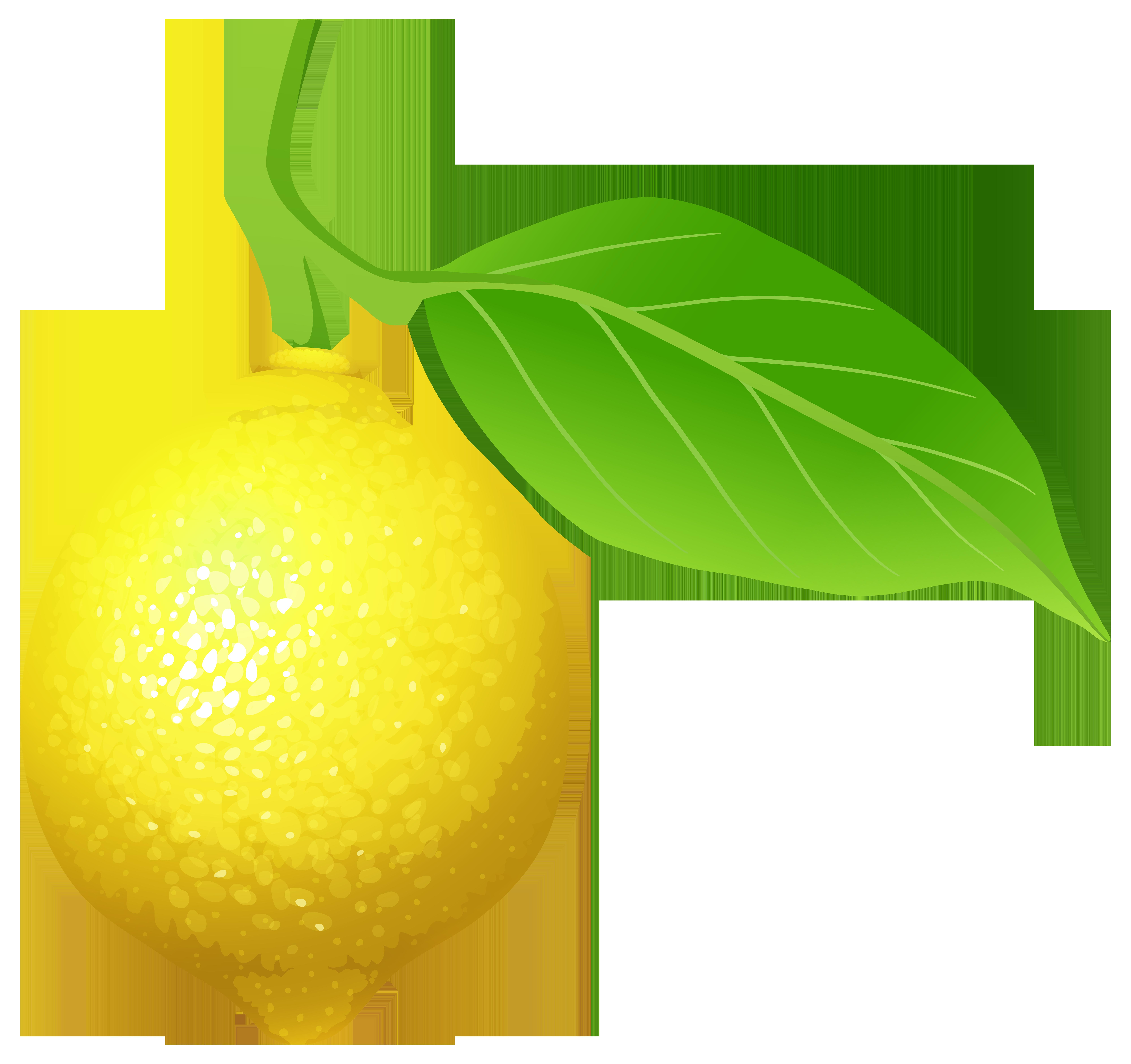 Lime clipart green lemon Clipart (4129) Clipart Best Free