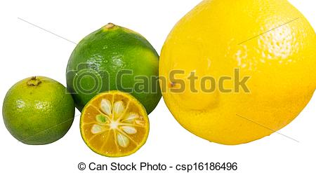 Lemon clipart kalamansi Images Photo 224 Calamansi Stock
