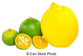 Lemon clipart kalamansi Lime Lemon and Picture of