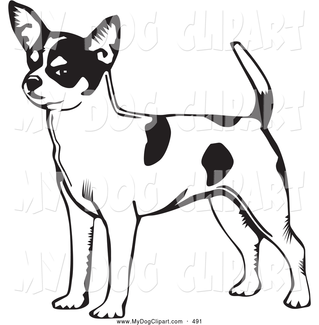Chihuahua clipart black and white Black And Art Panda White