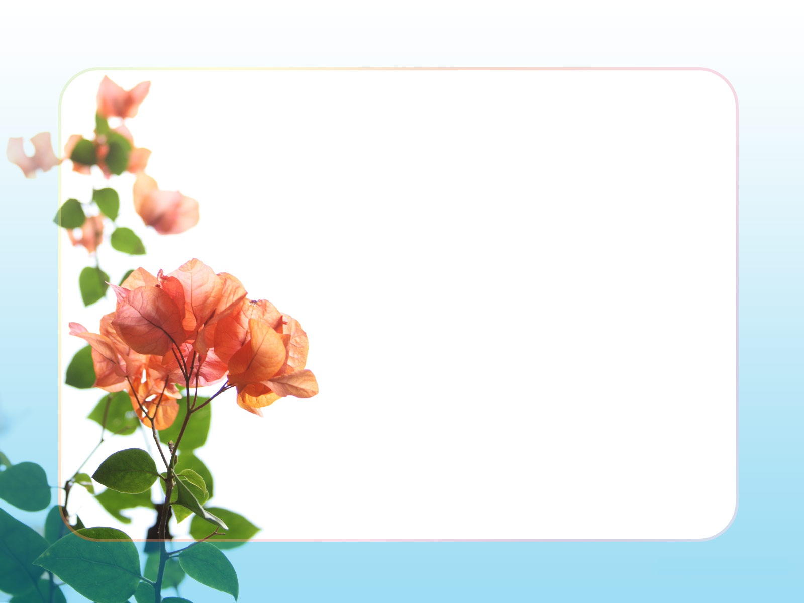 Orange Flower clipart flower bottom border Wallpaper Border Art HD