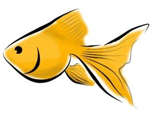 Yellow clipart goldfish cracker Free Clip Gold Art clip