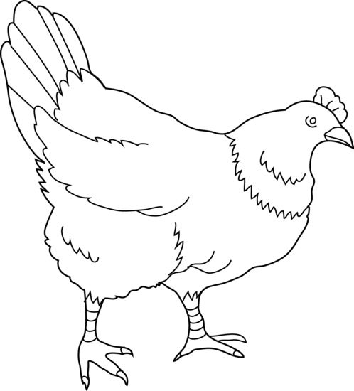 Black & White clipart hen Page clip Illustrations coloring Hen
