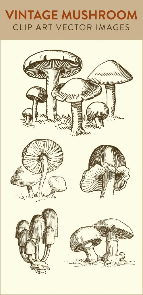 Line Art clipart stock Best mushroom art clipart ideas
