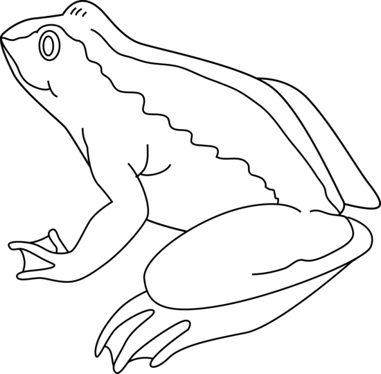 Amphibian clipart black and white Art Images Frog Frog clipart