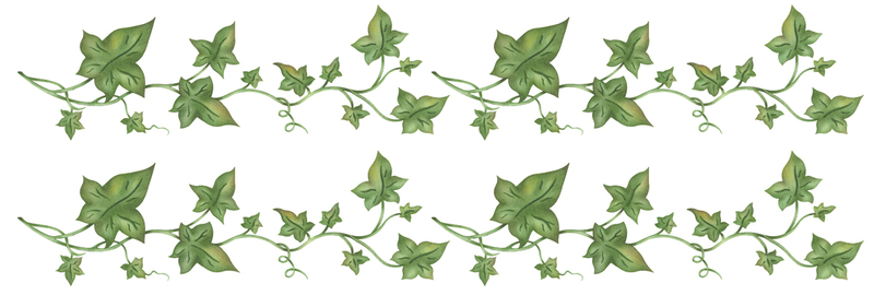 Lines clipart ivy Decor Home  Trailing 4