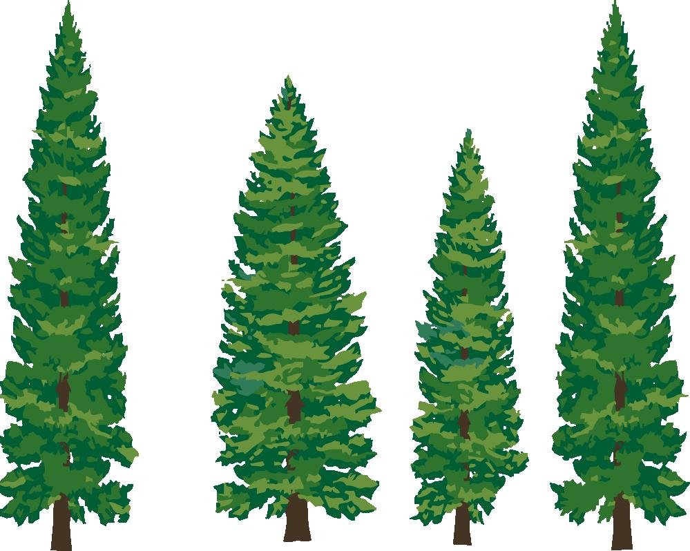 Line clipart pine tree Pine Clipart line Tree Tree
