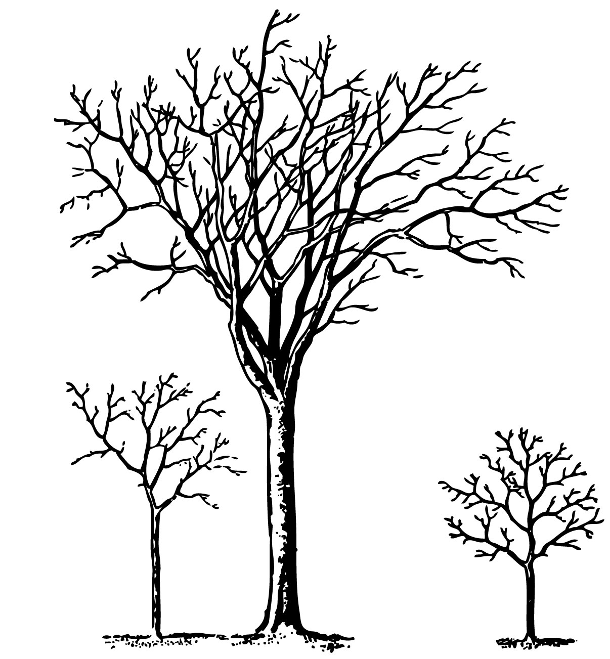 Lines clipart tree Trees Trees Clip Vintage Clip