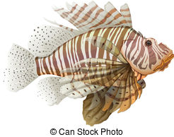 Lionfish clipart Vector Clipart Pterois Stock Illustrations
