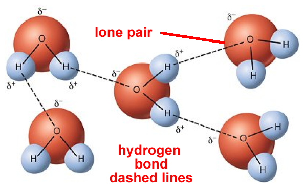 Liquid clipart water molecule Bonding Intermolecular forces hydrogen model