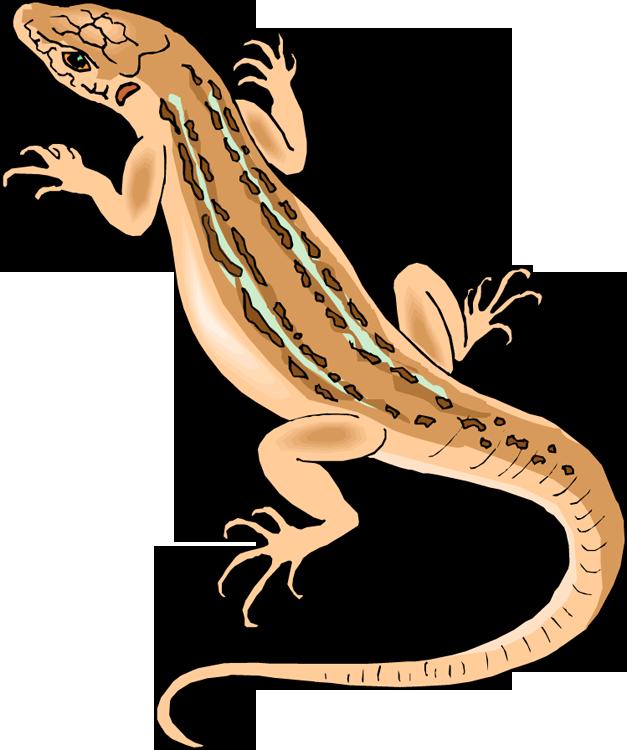 Lizard clipart Clipart Clipart « · Best