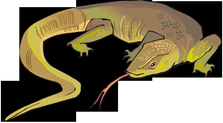 Monitor Lizard clipart Clipart Best Free #8165 Lizard